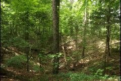Bois de Chevalier